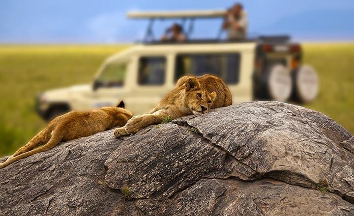 5-Tips-on-Tanzania-Safaris.jpg