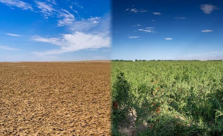 诺木洪荒漠与绿洲对比.jpg
