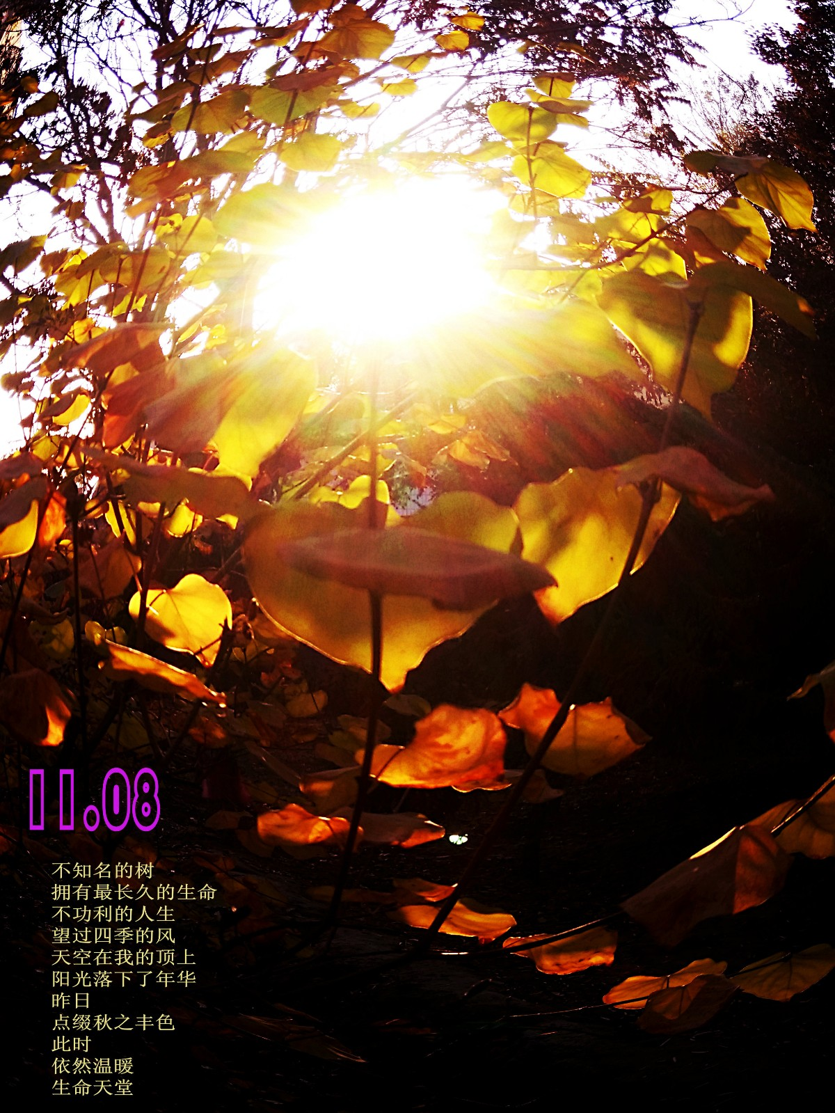 IMG_20161103_082614.jpg