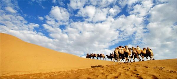沙漠骆驼2.jpg