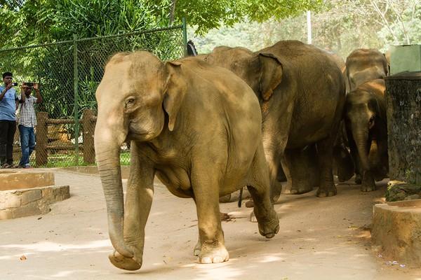 大象孤儿院-洗澡.jpeg