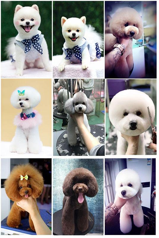 南京宠物美容培训多少钱