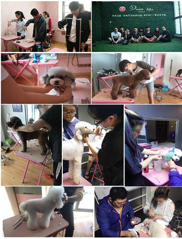 南京宠物培训费用