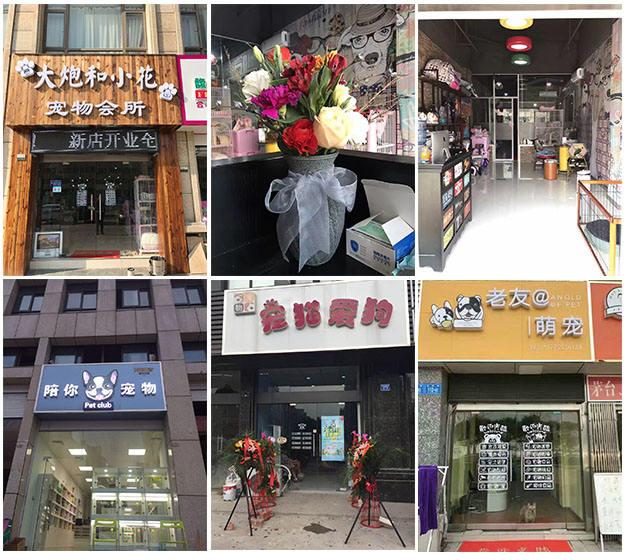 南京宠物培训中心