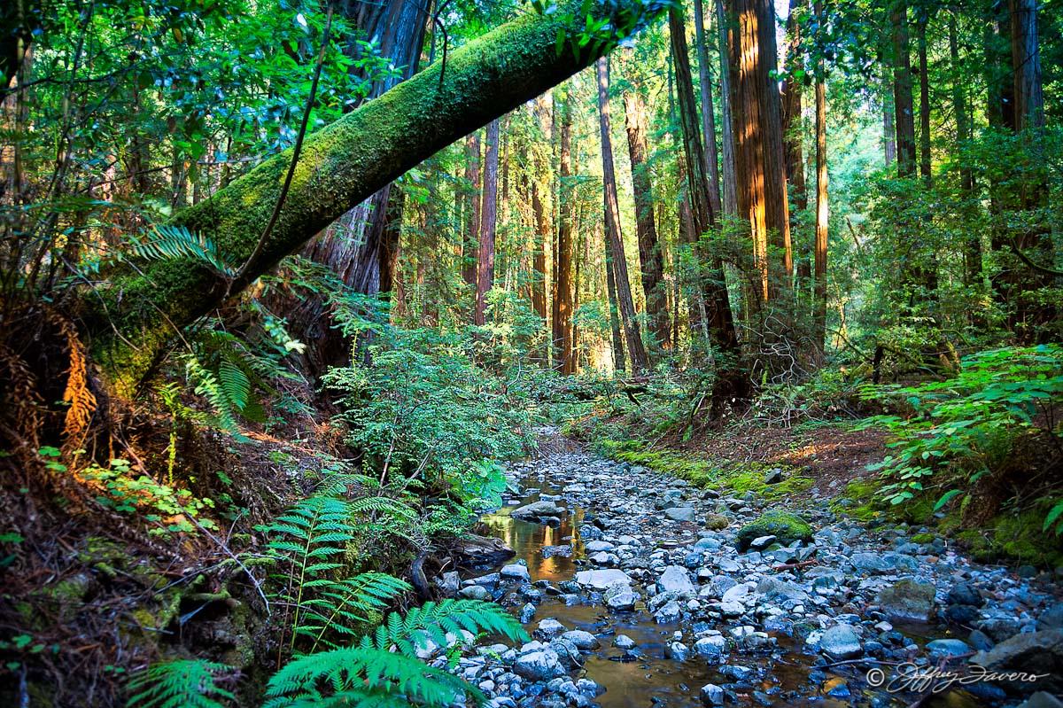 浅谈国外森林旅游开发模式