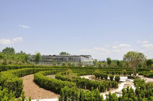红豆杉作为园林绿化树种迈出了里程碑式的一步|企业新闻-陕西省澳门博彩生物工程股份有限公司
