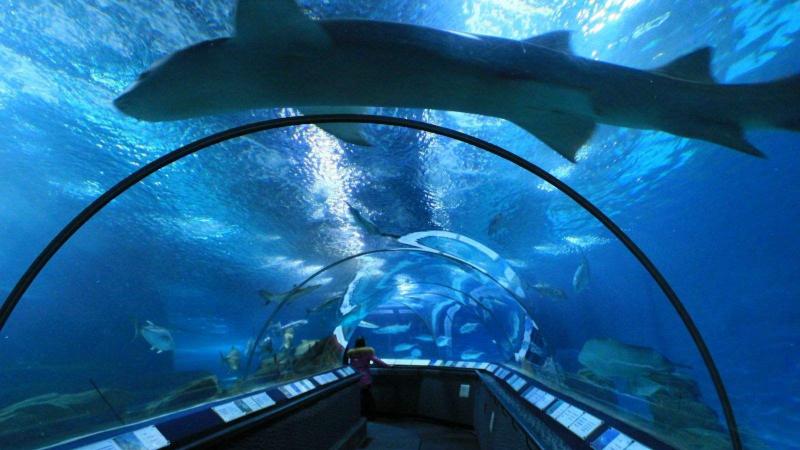 海洋水族馆.png