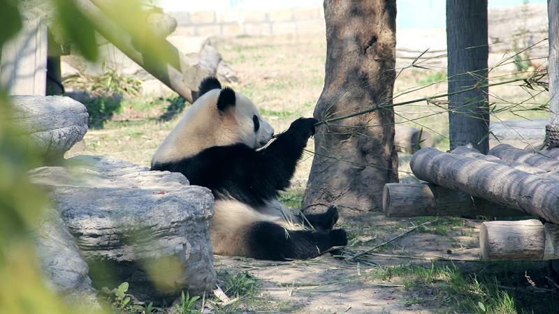 野生动物园.jpg