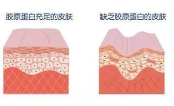 抗衰细胞图.jpg