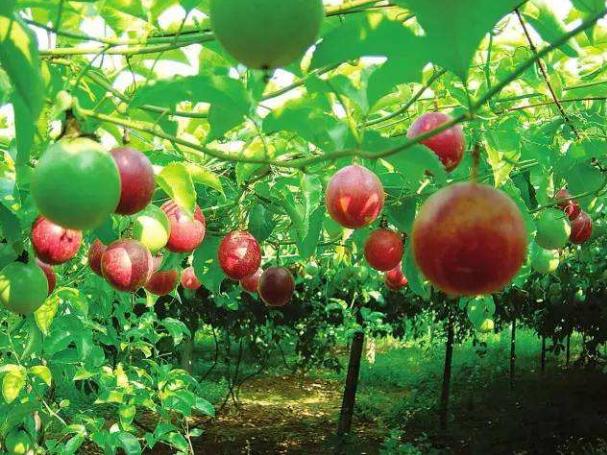 学——发挥农业的教育功能.png