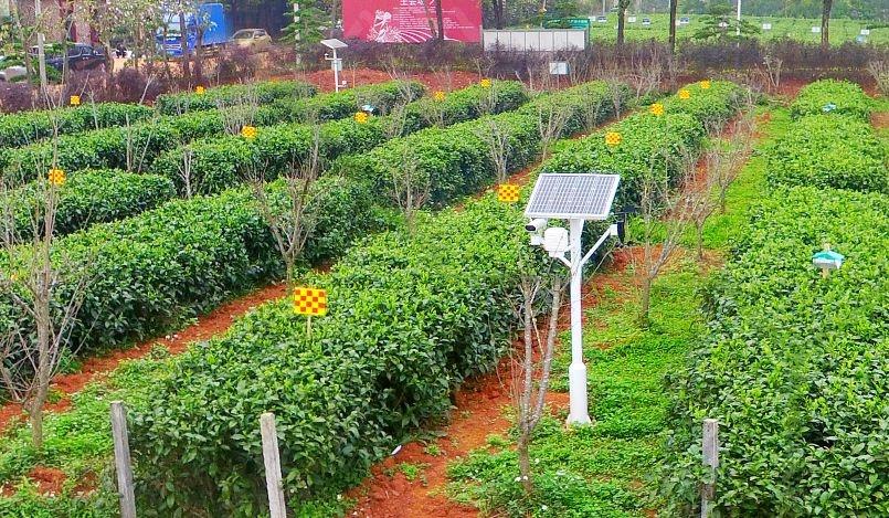 红茶基地中安装的海睿智能视频气象站.jpg