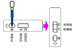 胶体金检测卡2.png