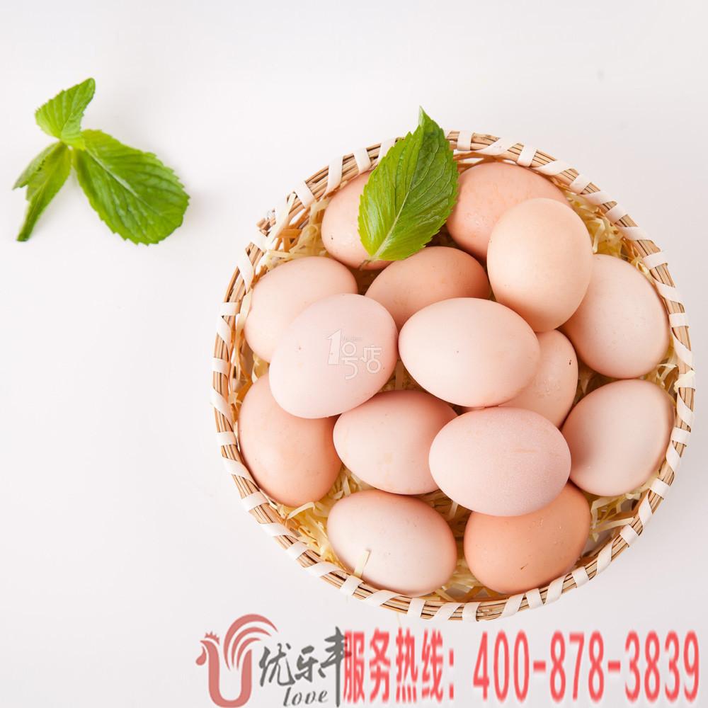 土鸡蛋与普通鸡蛋哪个更营养?|蛋鸡营养专家优乐丰