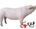 保证养猪场年利润持续增长的五个方法
