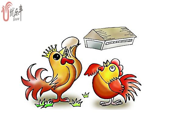 2018年蛋鸡产业竞争格局分析|产蛋率高