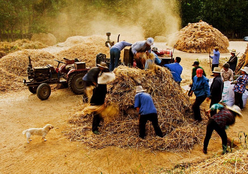 忙碌的农民.jpg