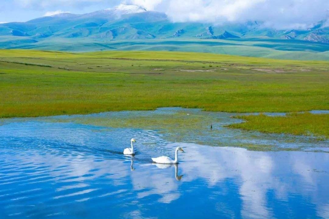 天鹅湖2.jpg