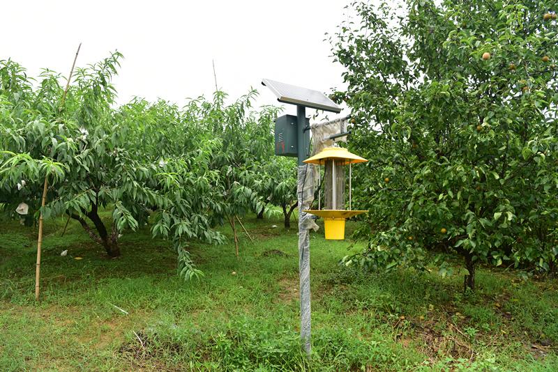 桃树病虫害防治技术分享之全年篇