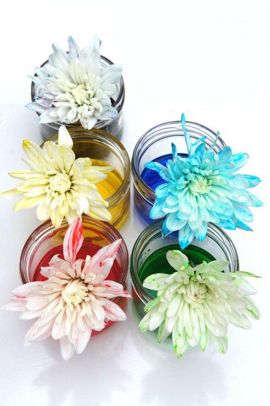 游戏-变色的花朵.jpg