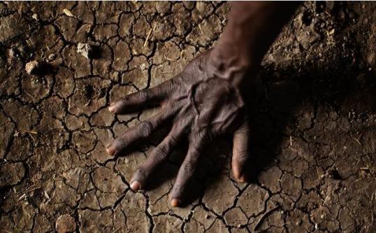 【农业知识】我们的土壤与有机质有什么关系?