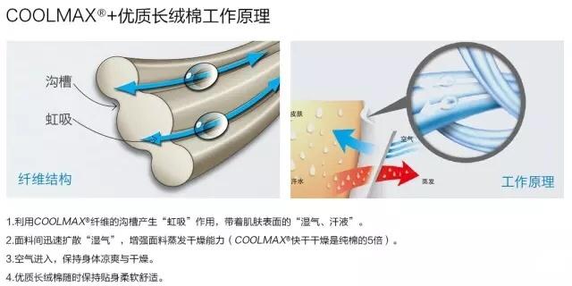 防水透气面料工作原理coolmax.jpg