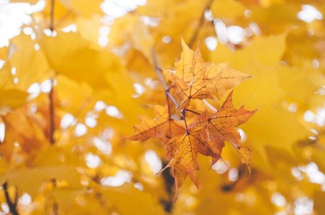 blur-branch-bright-831622.jpg