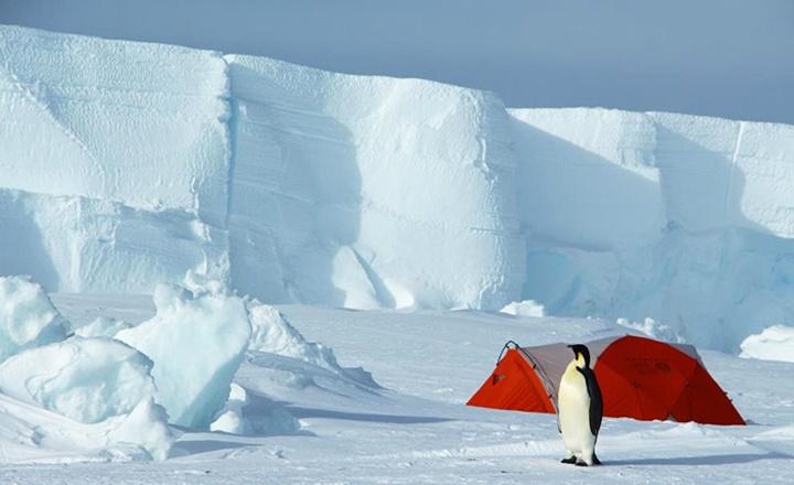 帝企鵝營地b.jpg