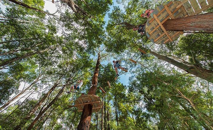treetop-adventure-park.jpg