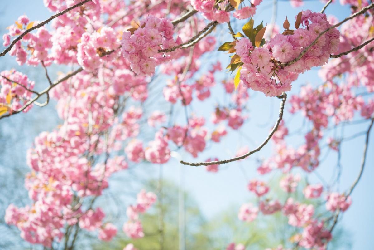 blossom-tree-sky-nature-1038508.jpeg