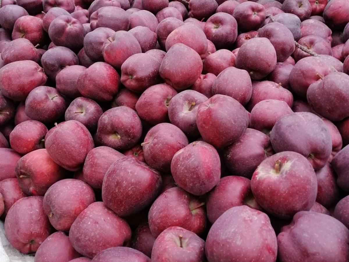 果树1021.1.jpg