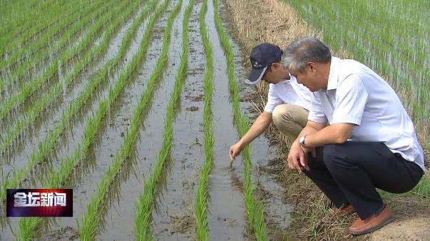 全区水稻栽插基本结束  一种就管正当时