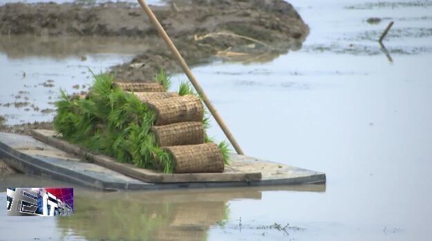 我区稻田养虾面积增加到810亩
