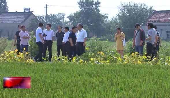 """金坛区供销社:今年""""农飞防""""植保服务面积超1万亩"""