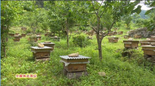 阳光扶贫之窗 今日宁陕 刘氏兄弟诚实养蜂 用心酿造甜蜜未来