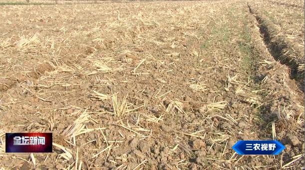 三农视野 天气干温度高 小麦田间管理要因地制宜