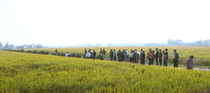 金坛区已建成137个水稻绿色高质高效示范方