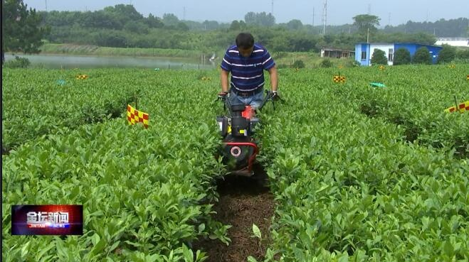 尊龙d88区茶园机械化生产现场会 机器换人 推动茶乡振兴