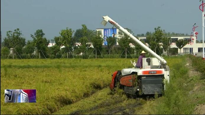 黄金村早稻提前收割  成全省最早上市新米