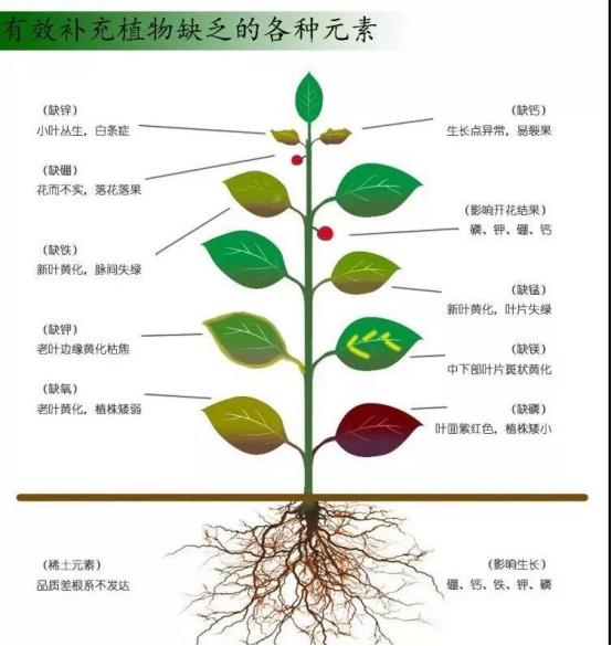 【农业知识】中微量元素肥料的作用与用量,一次说清楚!