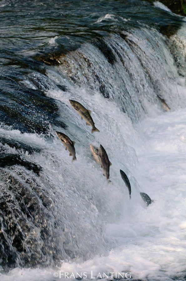 Salmon Run.jpg