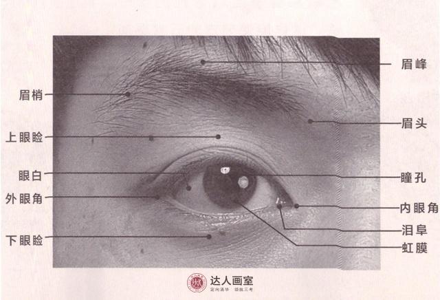 联考头像眼部的刻画