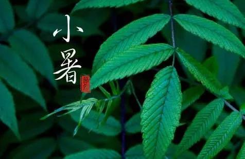 【节气|小暑】绿树浓荫,时至小暑