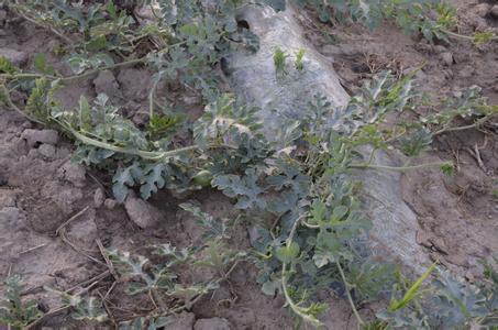 土壤酸碱性的鉴别及改良