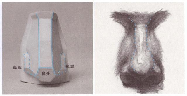 鼻子的画法