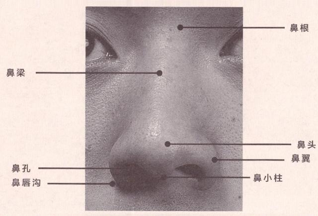 鼻子的组成.jpg