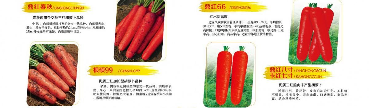 胡萝卜.jpg