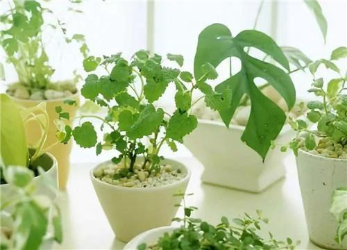 植物吸附法