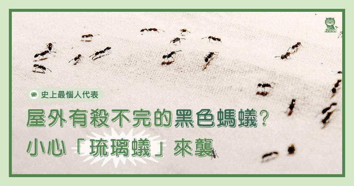 屋外有殺不完的黑色螞蟻?小心「琉璃蟻」來襲
