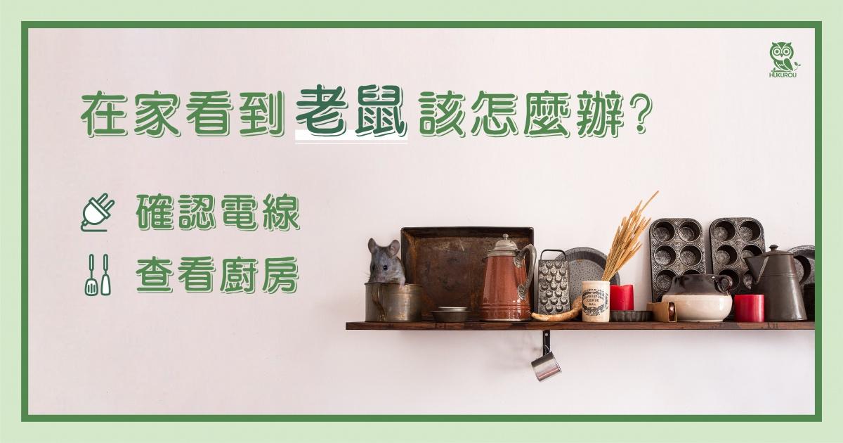 在家看到老鼠該怎麼辦?先確認電線跟廚房!