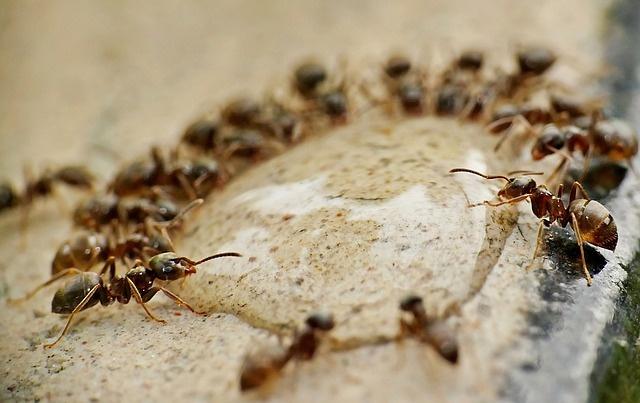 ants-4637999_640.jpg